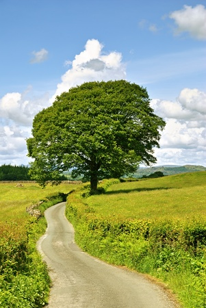 A single tree and a lane in meadows near Sawrey Stock Photo - 9796526
