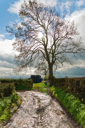 single lane road: A bare backlit tree on a curving dirt track Stock Photo