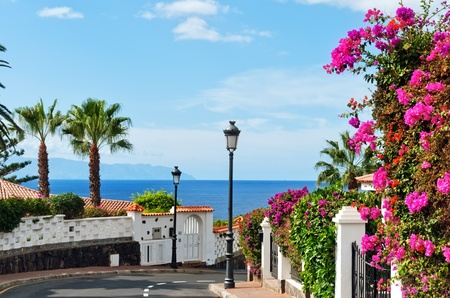 bougainvillea flowers: A street in Los Gigantes, Tenerife, Spanish Canary Islands.