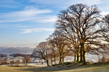 Winter In The English Lake District. Bare branched trees in a frosty landscape of open fields with distant hills photo