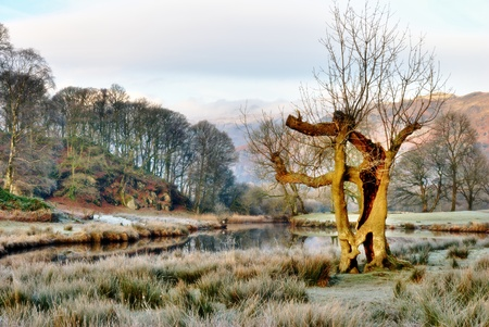 langdale: Bare winter trees standing sentinel alongside a frosted lake in Elterwater, Langdale, English Lake District