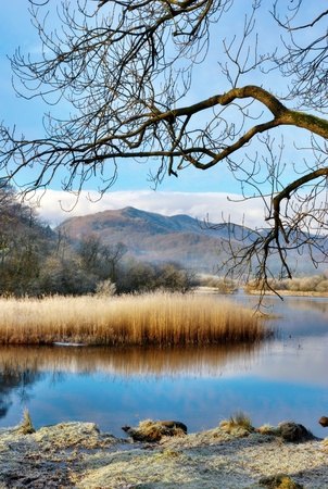 langdale: Frosty reeds and grasses with a mountain backdrop alongside the lake shore in Elterwater, Langdale, English Lake District Stock Photo