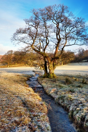 langdale: Bare winter tree with sunshine just touching the branches alongside a stream flowing through frosty fields, Langdale, English Lake District. Stock Photo