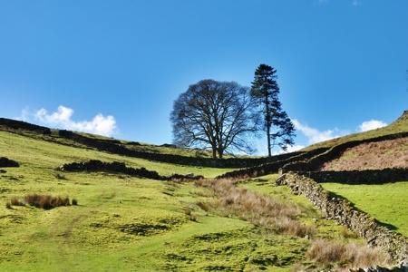 verdant: Lush stone walled green pastures on the slopes of the hills in Longsleddale, English Lake District