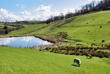 sloping: Sheep grazing in sloping green hillside pastures surrounding a picturesque pond reflecting the blue cloudy sky in the English countryside