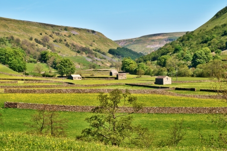 Yorkshire Dales: Old agricultural barns and dry stone walls surrounding lush pastures in the Yorkshire Dales near Muker