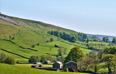 Yorkshire Dales: Lush green countryside of the Yorkshire Dales with old stone barns scattered aross the pastures