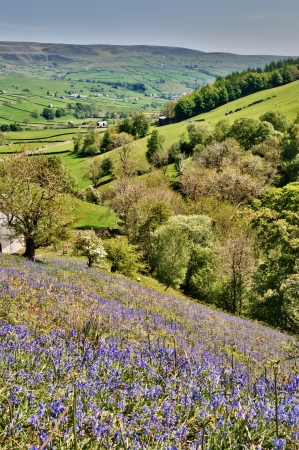 Yorkshire Dales: Bluebells growing on a sunny hillside above a lush green valley in Swaledale in the Yorkshire Dales National Park Stock Photo