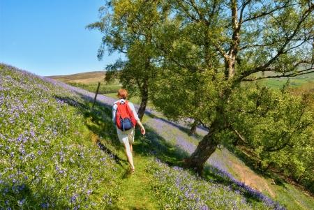 ramble: Female hiker enjoying a ramble walking through a carpet of wild spring bluebells in Swaledale, Yorkshire Dales Stock Photo