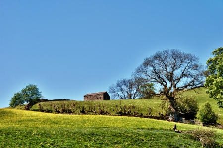 Picruesque traditional English stone barn on the skyline of a lush hill and meadow in the Yorkshire Dales, England Stock Photo - 14442843