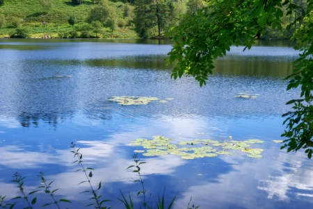 Water Lilies on Tarn Hows, a small body of water in the English Lake District Stock Photo - 15326234