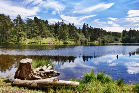 A tree stump on the shore of Tarn Hows, a small lake in the English Lake District Stock Photo