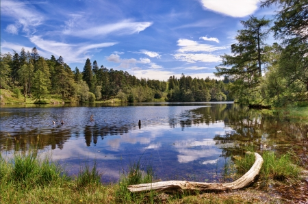 A view of Tarn Hows, a small lake in the English Lake District surrounded by woodland