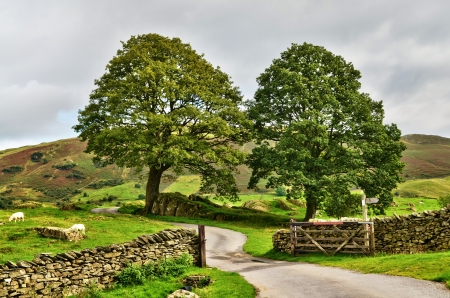 drystone: Meandering English country lane entering a gate in a dry-stone wall leading to lush farmland with grazing sheep under leafy green trees Stock Photo