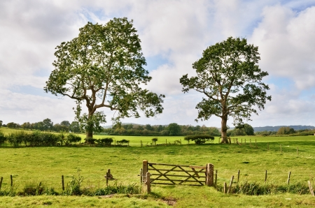 gateway: A traditional English wooden gate, leading into an enclosed field, with two mature trees under a blue Summer sky with Cumulus clouds