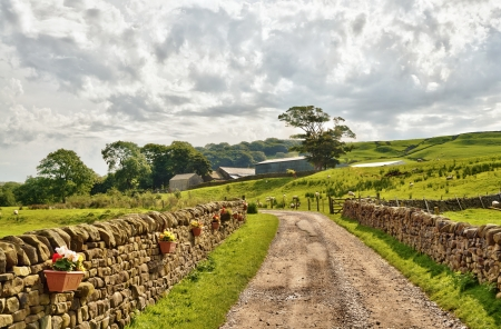 bordered: A peaceful country lane bordered by dry stone walls, running through lush, English pastureland, with trees and field buildings