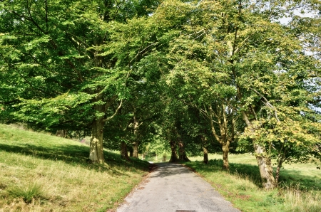 dappled: A narrow lane banked by grassy fields, running through an avenue of stately English Lime trees, in dappled sunshine