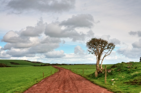 verdant: Rutted  track, running between lush green fields, with a solitary tree, set against a cloudy sky