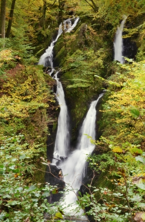 deciduous woodland: Twin waterfalls at Stock Ghyll Force, Ambleside, in the English Lake District, tumbling through a mossy gorge, with surrounding mixed deciduous woodland of beech and hazel  Stock Photo