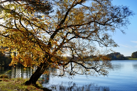 Beautiful tree with autumnal leafy foliage, overhanging Talkin Tarn, a tranquil body of water in Talkin Tarn Country park, Brampton, Cumbria Stock Photo - 17011199