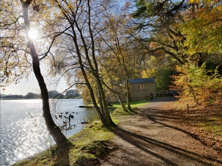 Trees in autumn foliage by Talkin Tarn, Brampton, with sunlight shining through the branches, casting shadows across the lakeside path Stock Photo