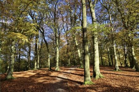 country park: �rboles en Talkin Tarn Country Park, Brampton, con las hojas iluminadas por el sol y las sombras de fundici�n a trav�s de la v�a de bosque en un d�a de oto�o