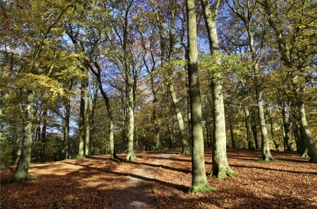 Trees in Talkin Tarn Country Park, Brampton, with the sunlit leaves, and casting shadows across the woodland pathway on an Autumn day Stock Photo - 17084738