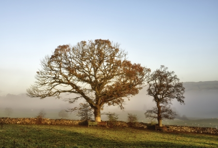 Two trees growing along a field boundary,  with sun breaking through a misty dawn on an early autumn morning Stock Photo - 17084739
