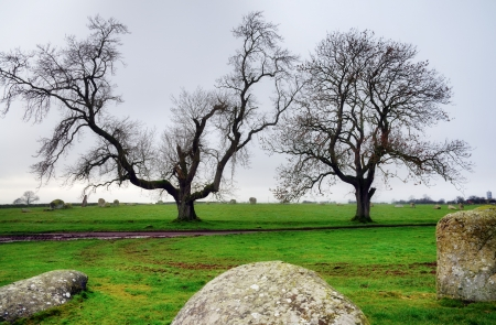 A view of two trees situated in Long Meg Stone Circle, a ancient group of rhyolite boulders,  also known as Maughanby Circle, near Little Salkeld, Cumbria, with three of the stones in the foreground Stock Photo - 18290781