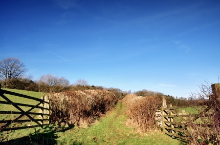 hedgerow: View of two wooden gates on a trackway in the English countryside, bordered by hedgerows and with green fields on either side  Stock Photo