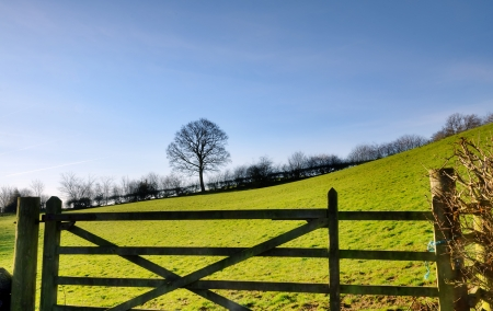 hedgerow: View of a tree and hedgerow bordering a green, sloping field in the English countryside, with a wooden gate in the foreground   Stock Photo