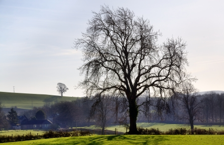 Beautiful view of a tree with elegantly trailing branches, in the English countryside with lush green fields, hedgerows and distant woodland Stock Photo - 18517400
