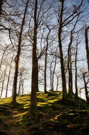 copse: Copse of trees covering a small knoll, on a winter morning with sunlight illuminating the mossy ground and set against a blue sky  Stock Photo