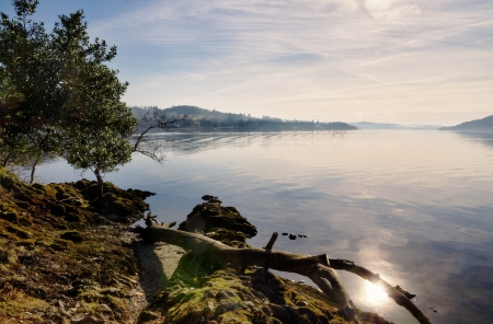 View of a fallen branch resting on a rocky outcrop by the shore of Windermere in the English Lake District, on a beautiful winter morning with sunshine reflecting off the calm water Stock Photo - 18785308
