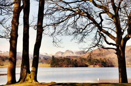langdale pikes: Tranquil view looking across Windermere towards the Langdale Pikes, framed by trees on the shore, on a sunny winter morning in the English Lake District