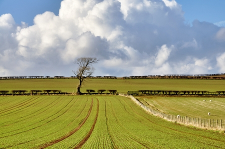 View of green planted fields in the English countryside with fences and hedgrows, set again a blue sky with cumulus clouds Stock Photo - 19422466