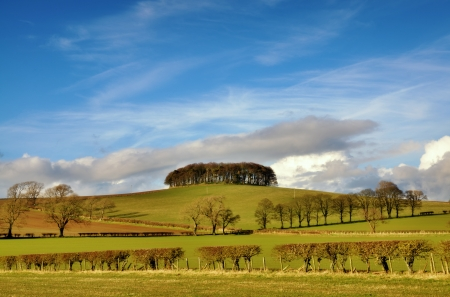View of a copse and row of trees amidst hedged green fields in the English countryside set again a blue sky with clouds  Stock Photo - 19422492