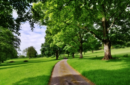 Traditional English countryside scene with a narrow road running through an avenue of leafy deciduous trees on a summer day  Stock Photo - 20298987