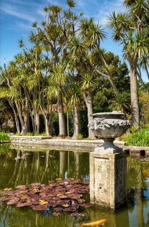 Palms and a pond with Lily pads in Logan Botanic Gardens on the Mull of Galloway in South West Scotland Stock Photo - 21156740