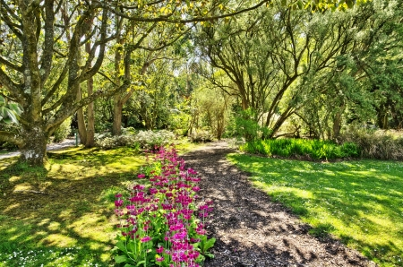 View of a path running through woodland with flowers in Logan Botanic Gardens on the Mull of Galloway in South West Scotland