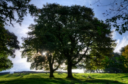 View of two backlit trees in a meadow on a sunny day Stock Photo - 24540276