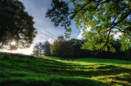 View of a sloping meadow with overhanging trees on a sunny day Stock Photo - 24540278
