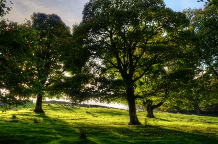 View of a backlit sloping meadow with trees on a sunny day Stock Photo - 24540280