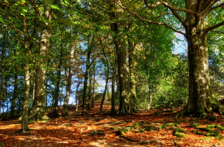deciduous woodland: View of sun dappled deciduous woodland on a sunny autumn day