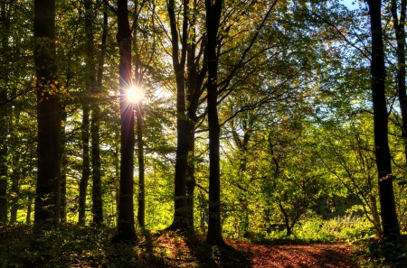 View of sun dappled deciduous woodland on a sunny autumn day Stock Photo - 24540299