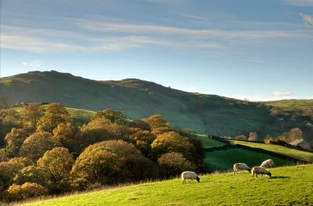View of sheep grazing in an English rural landscape on an autumn day Stock Photo - 24742917