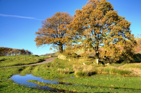 Two trees in an autumn rural landscape with water filled ruts Stock Photo - 24826880
