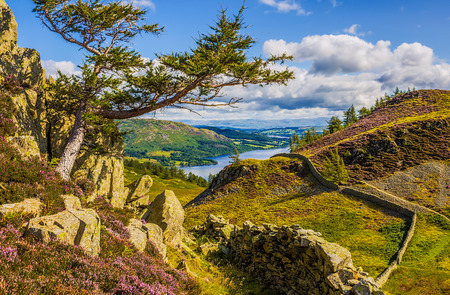 Ullswater Lake seen from the slopes of Sheffield Pike, England. Lake district dry stone walls and heather.
