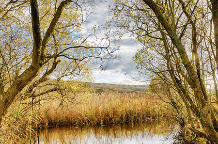 Reeds and a pond at the R.S.P.B reserve of Leighton Moss, Lancashire, England