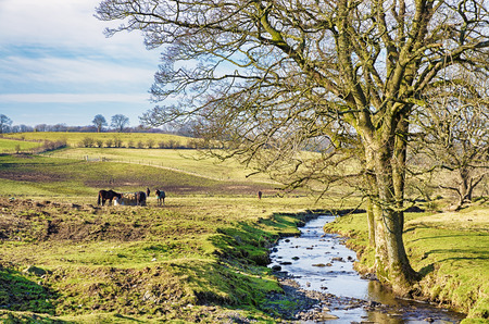 A typical English rural scene with a small group of horses grazing by a stream and a bare tree.
